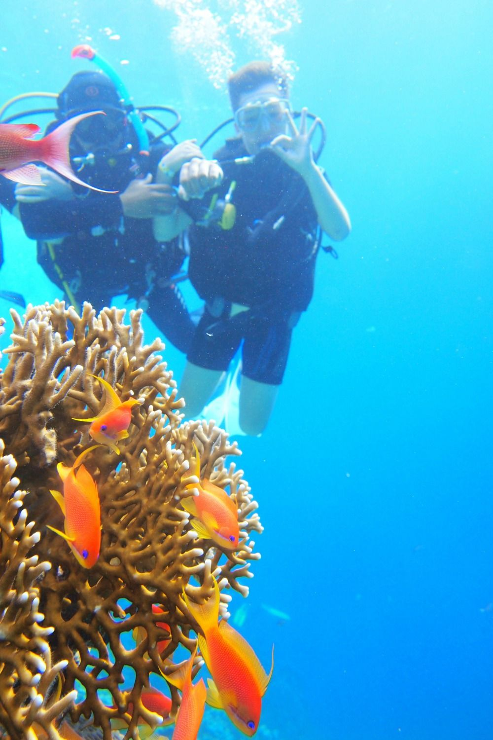 Diving in the Red Sea - what's it' like, what to expect, is is suitable for kids?