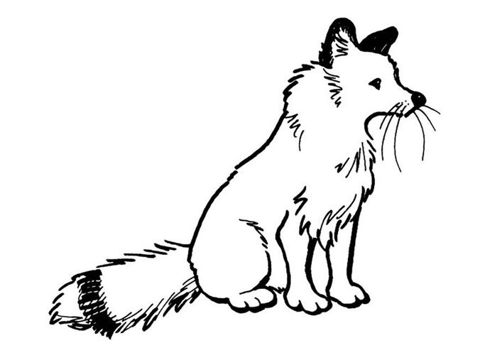 Coloring Pages Of A Arctic Fox Dengan Gambar