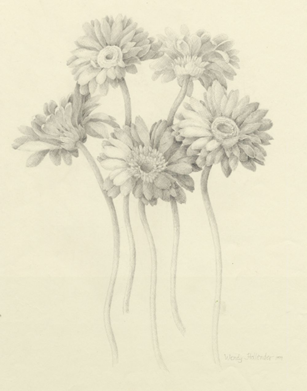 Flowers Gallery Daisy Drawing Gerber Daisies Botanical Art