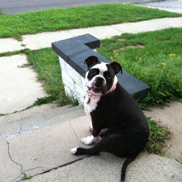 Chubby Puppy!