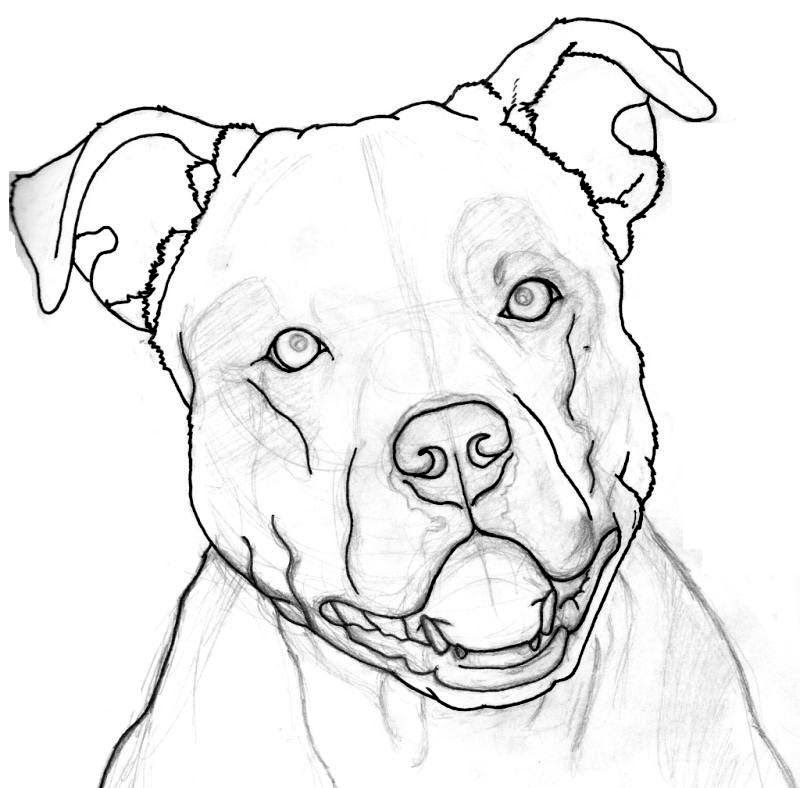 how to draw a pitbull face google search