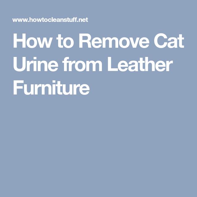 Dog Urine On Leather Furniture