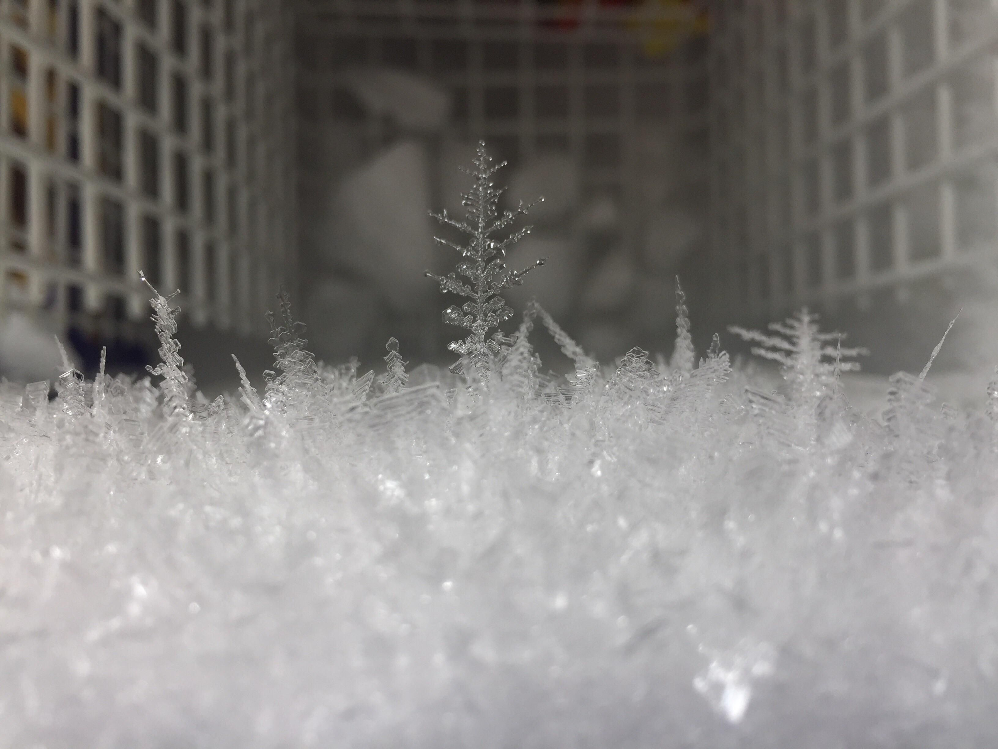 Ice in freezer looks a small ice forest repin and follow cool
