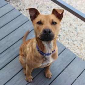 Best Friends In Atlanta Animal Society Pets Animal Rescue