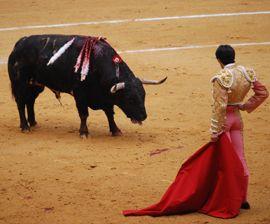 Spanish Balearic Islands Votes To Eliminate Bullfighting Mercy For Animals Animal Rescue Humane Society