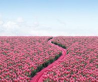 Follow the Hot Pink Road