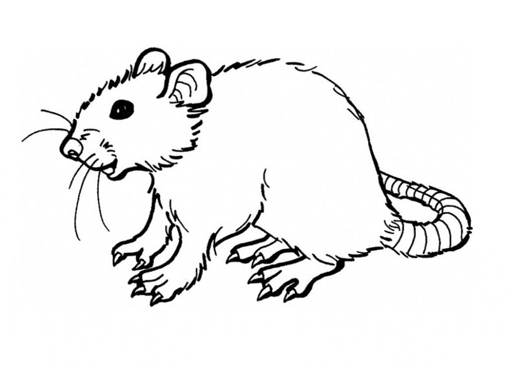 Free Printable Rat Coloring Pages For Kids Super Coloring Pages