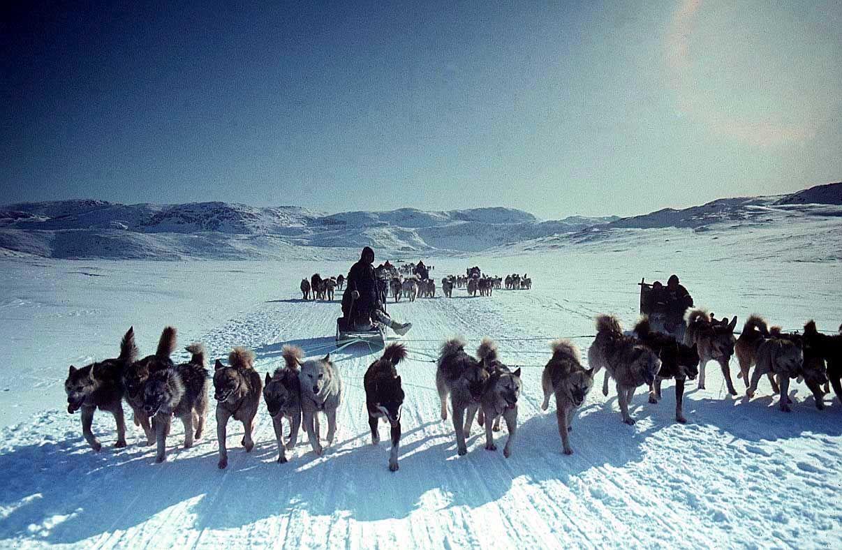 Risultati immagini per eskimo