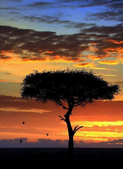 ✯ Africa - Dawn on the Maasai Mara Game Reserve with silhouetted Acacia tree and hot air ballons, Kenya Africa