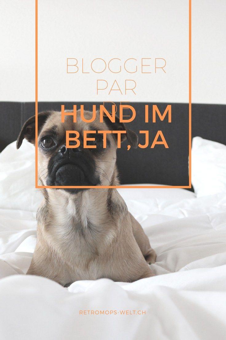 Hund Im Bett Hundewissen Hunde Bett Hunde Und Hundetraining