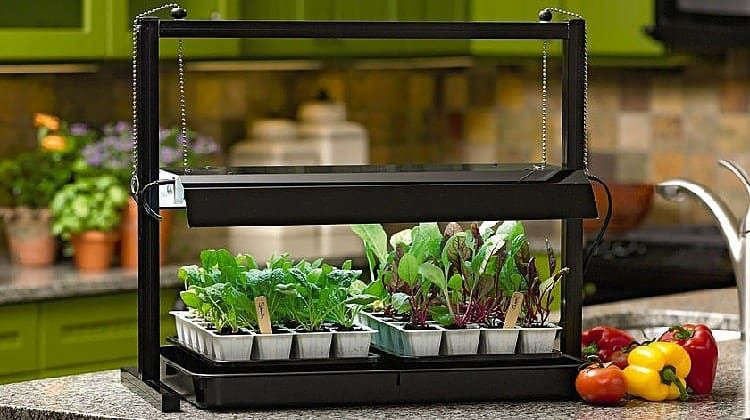 Diy Indoor Grow Light Inexpensive Way To Growing An Indoor Garden Indoor Grow Lights Grow Lights For Plants Indoor Vegetable Gardening