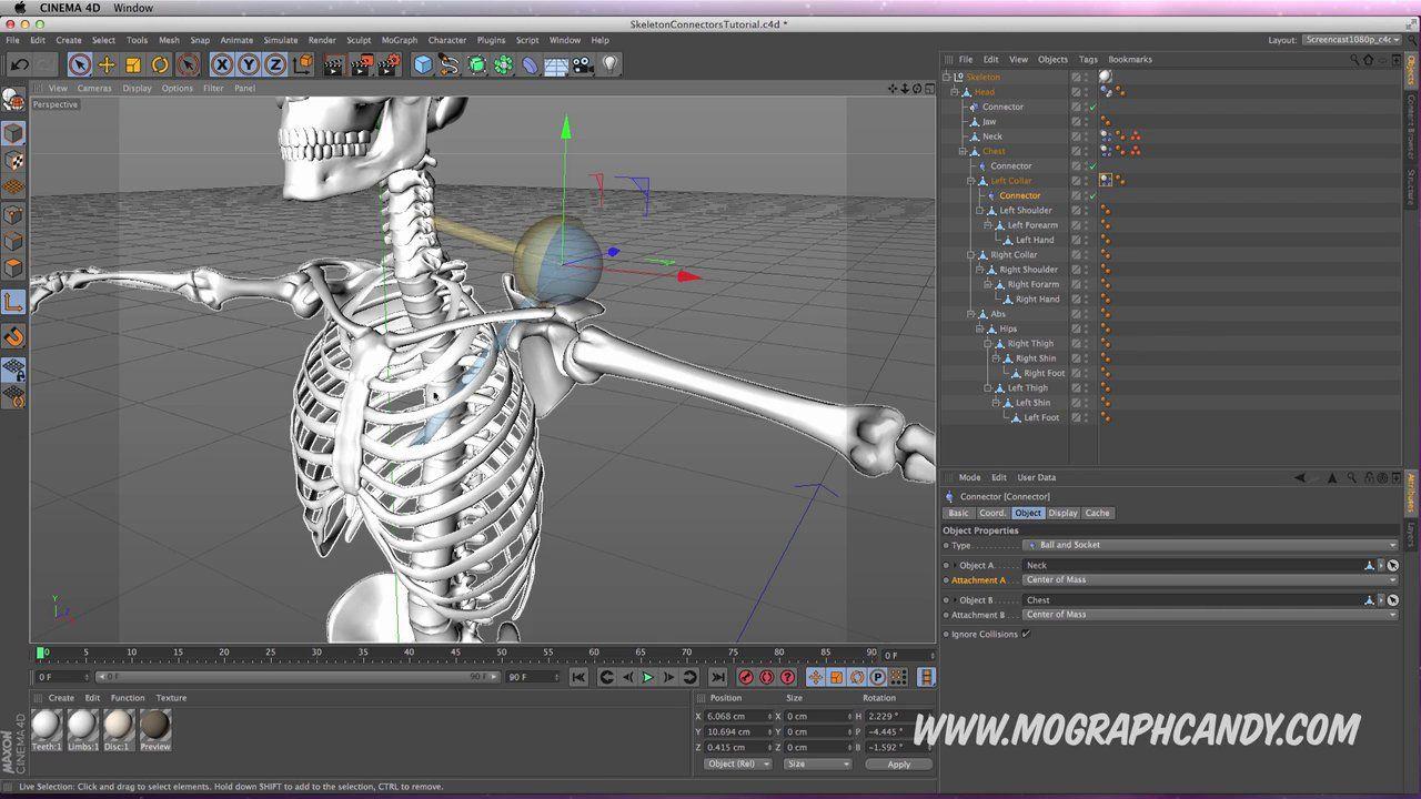 Cinema 4D - Rigging a Dynamic Skeleton using Connectors