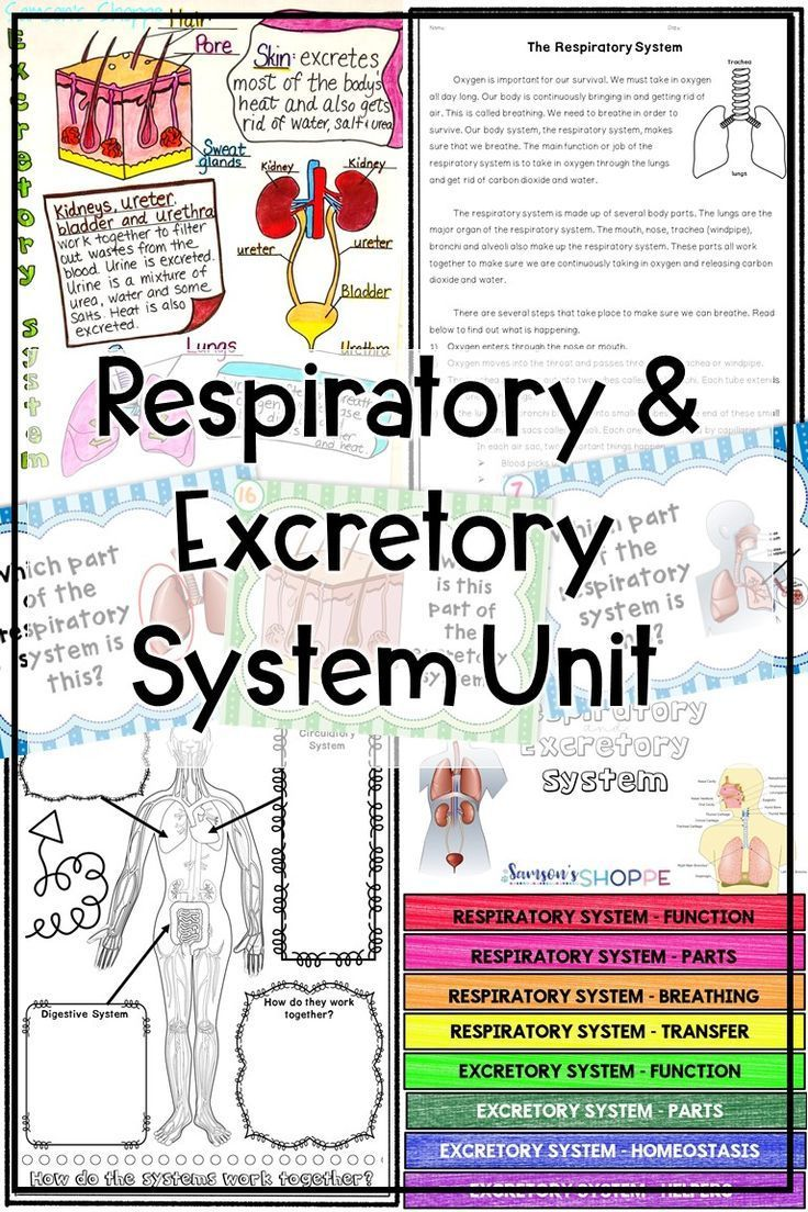 Respiratory And Excretory System Human Body Unit Activities In 2020 Human Body Unit Excretory System Human Body Science