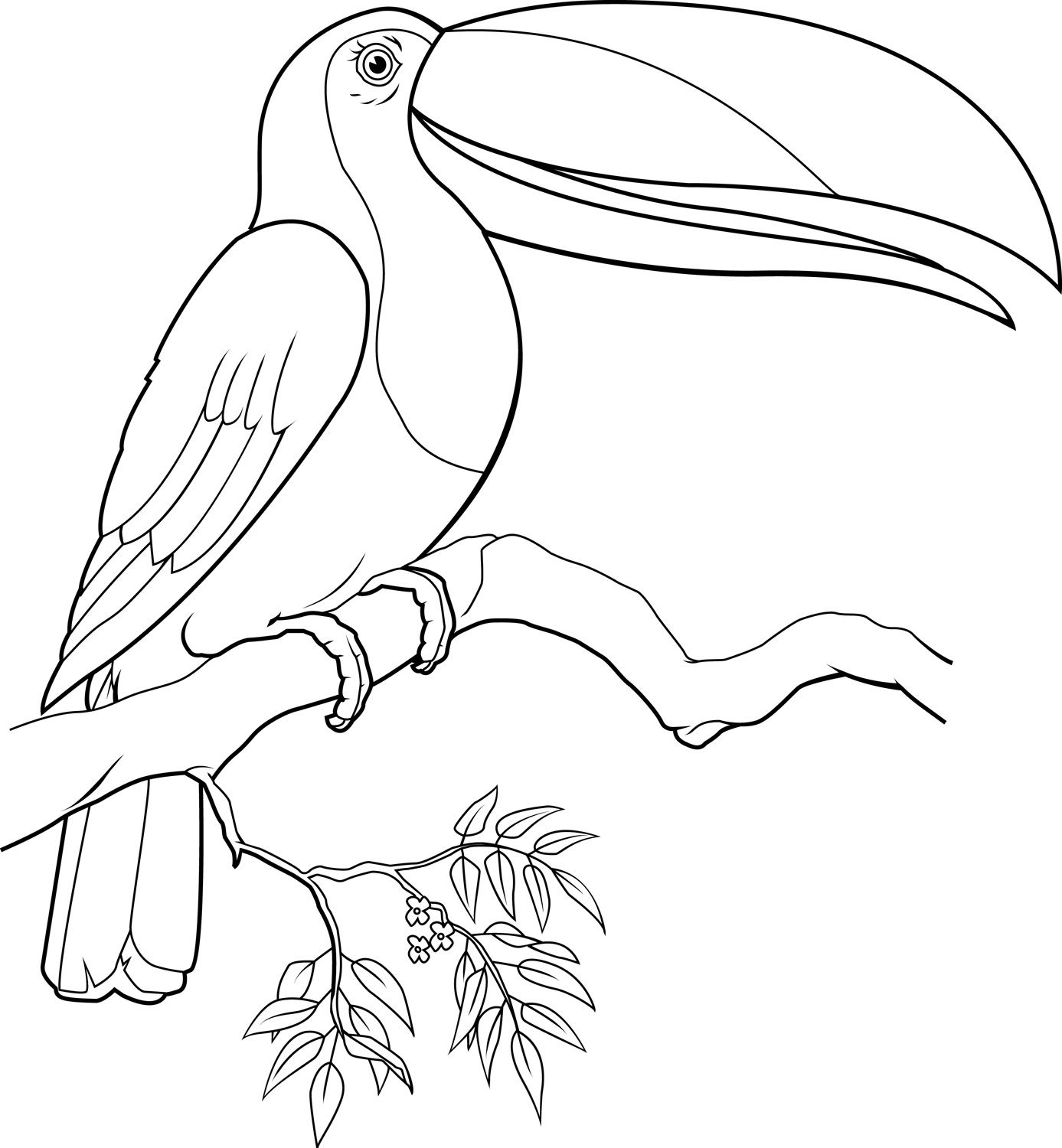 Coloring Page Of A Toucan Bird Coloring Pages