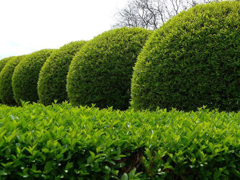 Le jardin de l'orangerie du parc de Sceaux (Hauts-de-Seine)  http://www.pariscotejardin.fr/2012/04/le-jardin-de-lorangerie-du-parc-de-sceaux-hauts-de-seine/