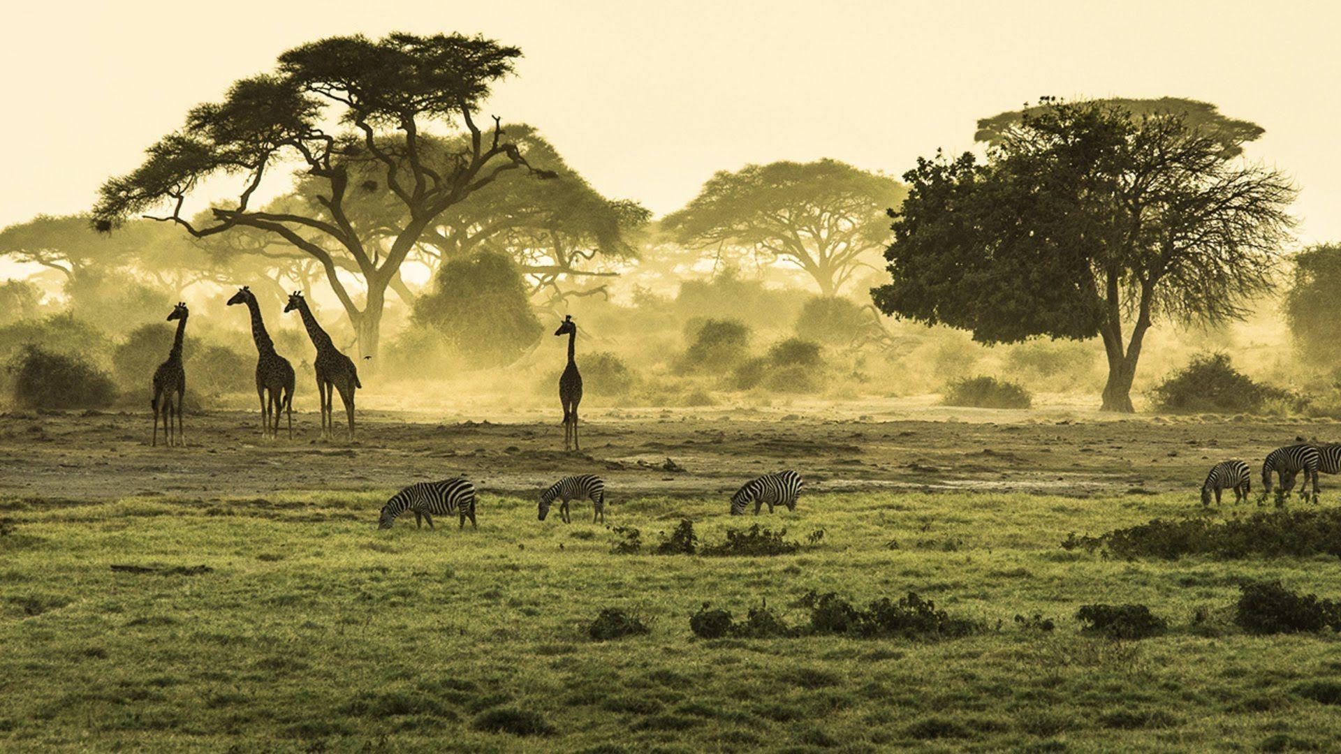 En sniktitt på hva du kan oppleve på Safari i Øst-Afrika: Kenya og Tanzania  http://travels.kilroy.no/destinasjoner/afrika/safari