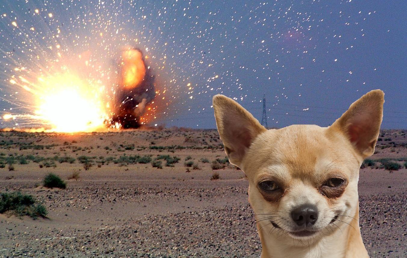 chihuahua meme Chihuahua Memes Chihuahua funny, Funny