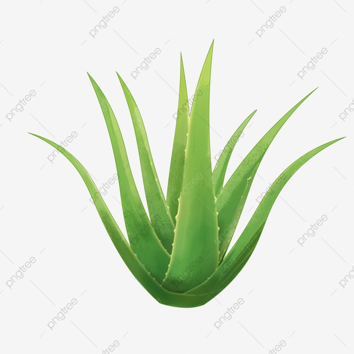 An Aloe Realistic Style Png Aloe Vera Realistic Style Plant Png Transparent Clipart Image And Psd File For Free Download In 2021 Clipart Images Clip Art Image