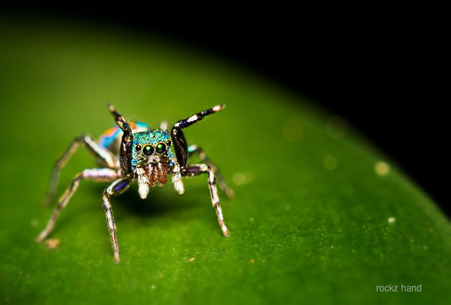 It is an image of Modest Spider From Bugs Life