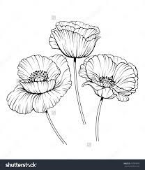 Black and white drawing poppy flower black and white drawing poppy flower mightylinksfo