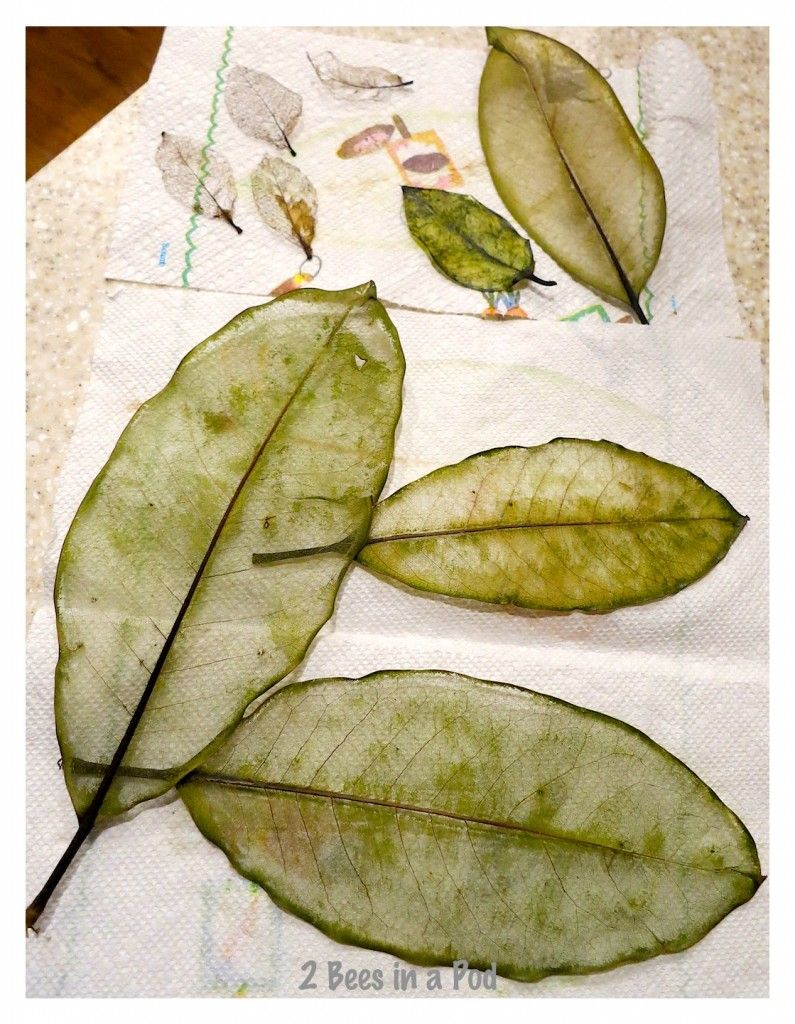 How to Make Skeleton Leaves... - 2 Bees in a Pod