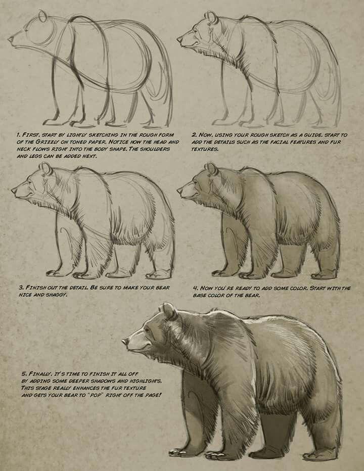 Aaron Blaise | draw | Pinterest | Zeichnen lernen, Zeichnen und Bär ...
