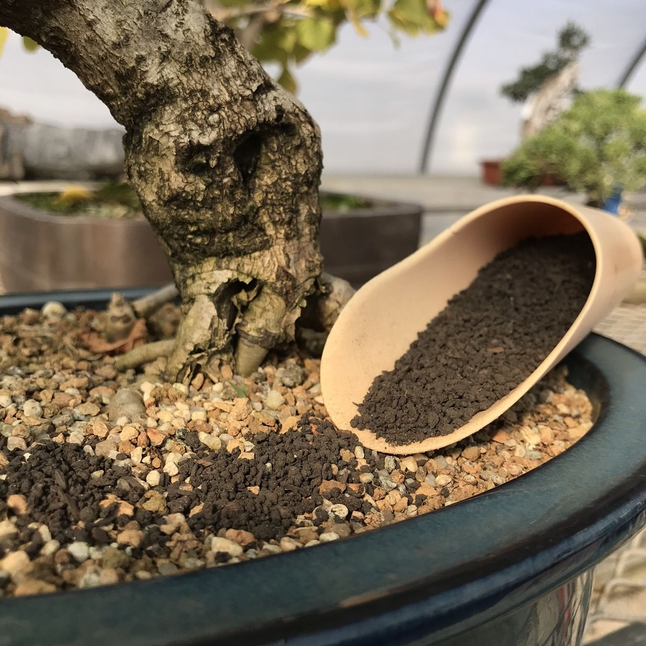 Fertilizing 101: How to Fertilize Your Bonsai - Bonsai Sanctum #bonsaiplants