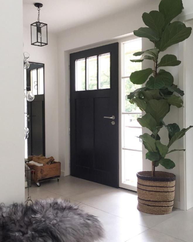Haustür und Geigenfeige #geigenfeige #eingangsbereich