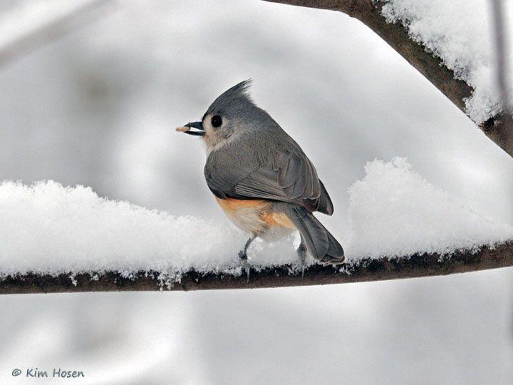 Pin by Melody Mason on Birds | Backyard birds