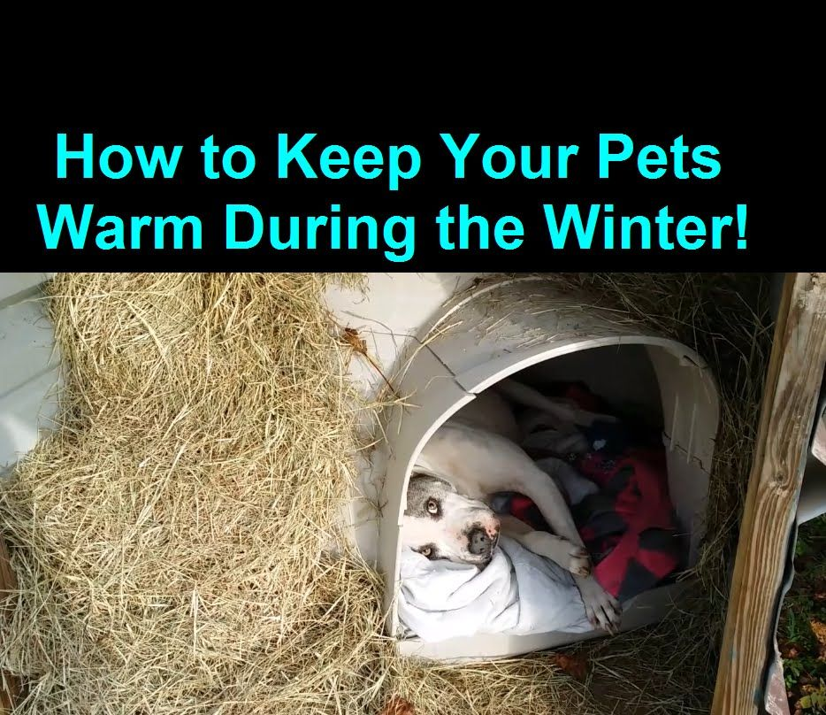How To Keep A Dog Warm During Winter Cold Weather House You