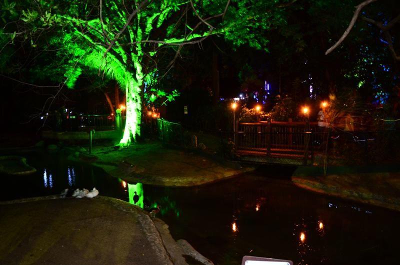 #Zoo #Noche