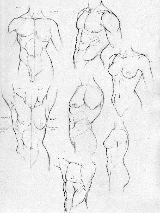 Anatomy Study Part 2-Torso by ~Rogzilla on deviantART | Diseño ...