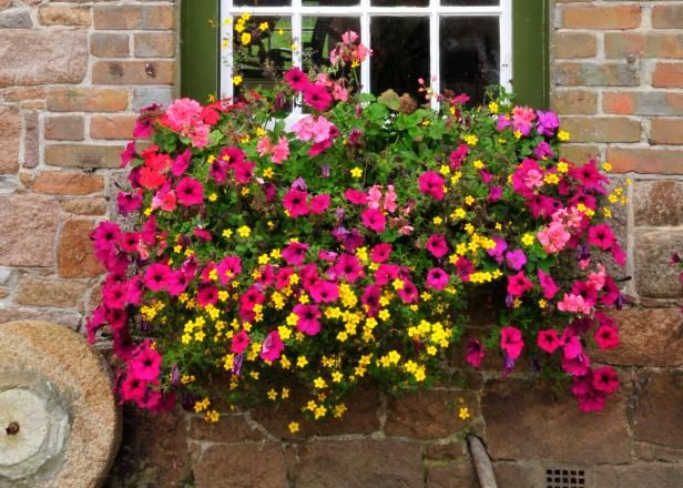 14 Simply Stunning Summer Window Boxes | Ideas | Pinterest ...