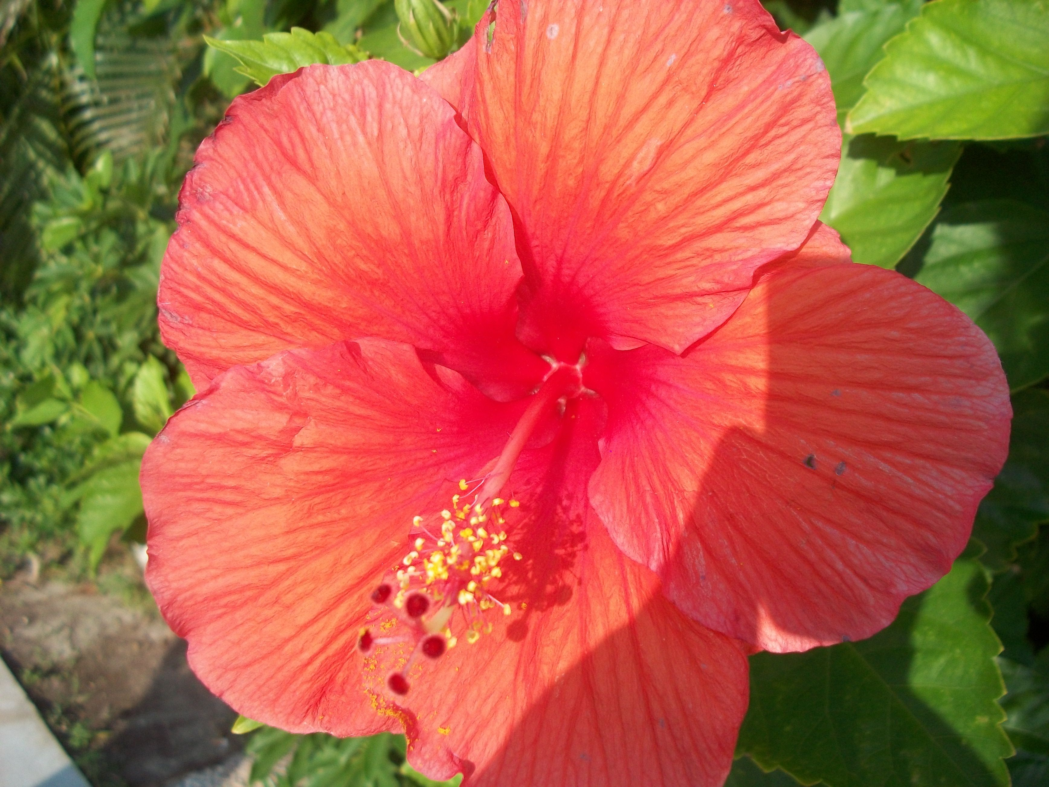 A Very Pretty Flower I Found In Mexico Intro To Visual Arts