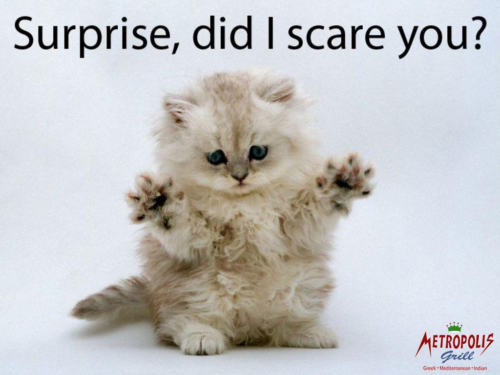 Little kitten wanna say something METROPOLIS GRILL