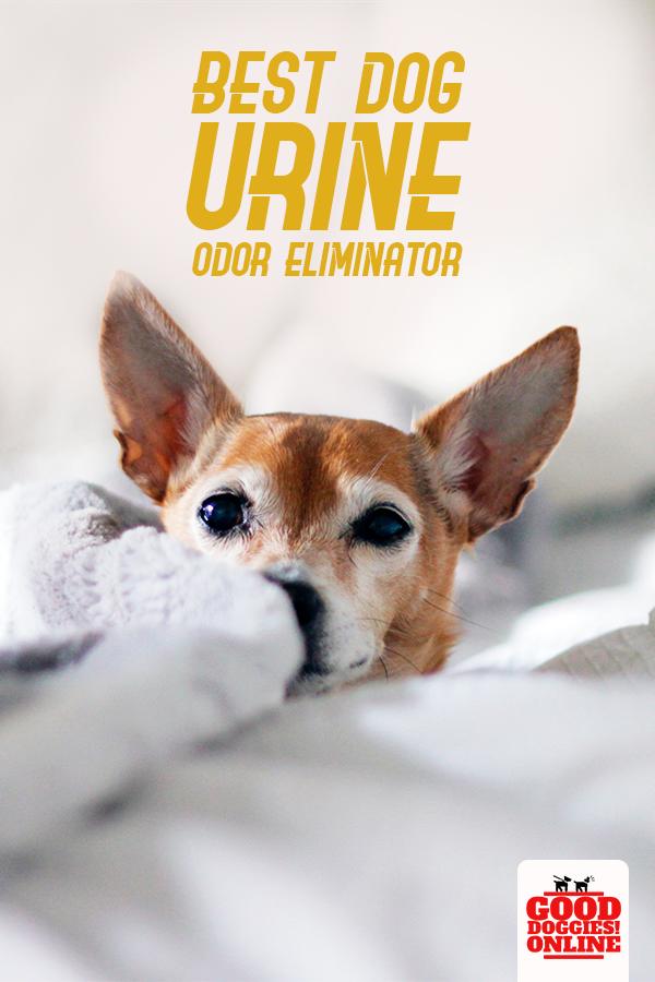 Best Dog Urine Odor Eliminator Dog Urine Pet Urine Smell Dog Pee Smell