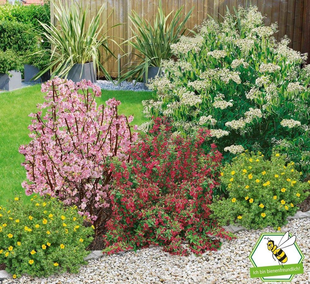 Mein Schoner Garten Bienenfreundliche Hecke Im Set 5 Pflanzen Vorgarten Pflanzen Bepflanzung Pflanzen