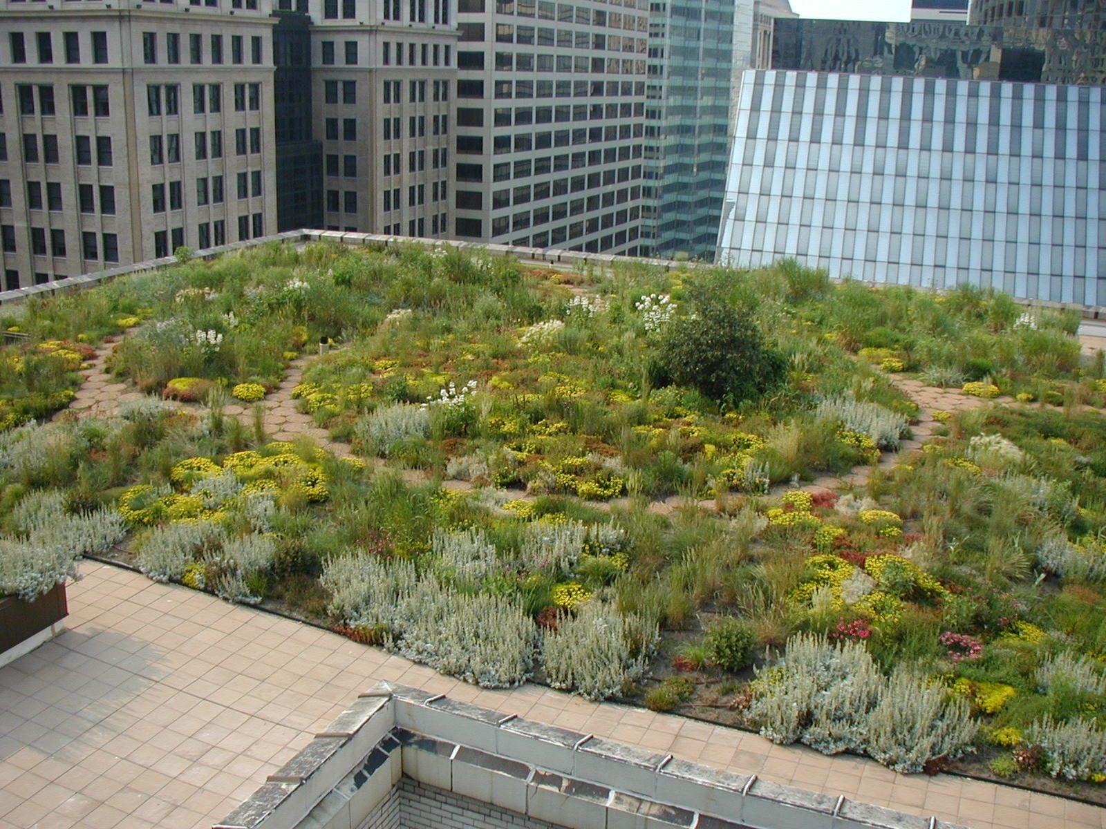 Chgocityhall Aerial Jpg 1600 1200 Green Roof Green Roof Technology Roof Garden