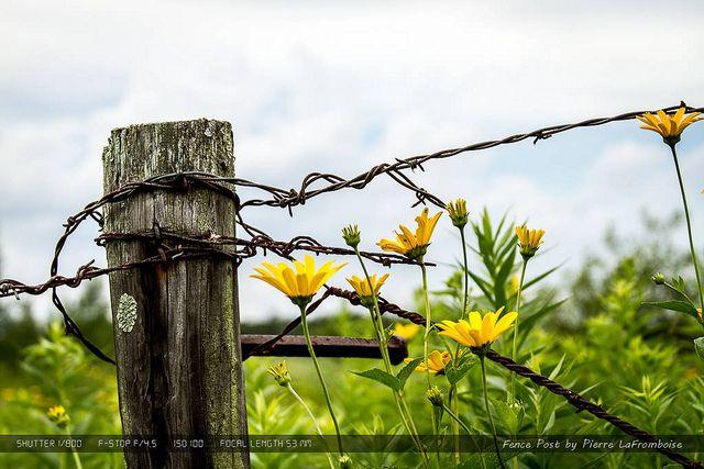 Fence Post Zaun Kunst Land Zaun Rustikaler Zaun