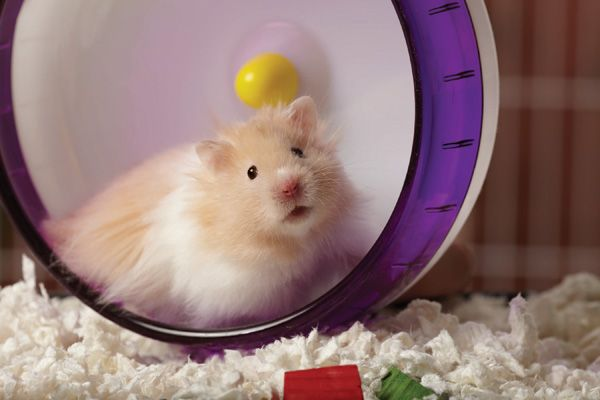 Small Pets Need Fun Too Best Hypoallergenic Dogs Cute Hamsters Small Pet Supplies