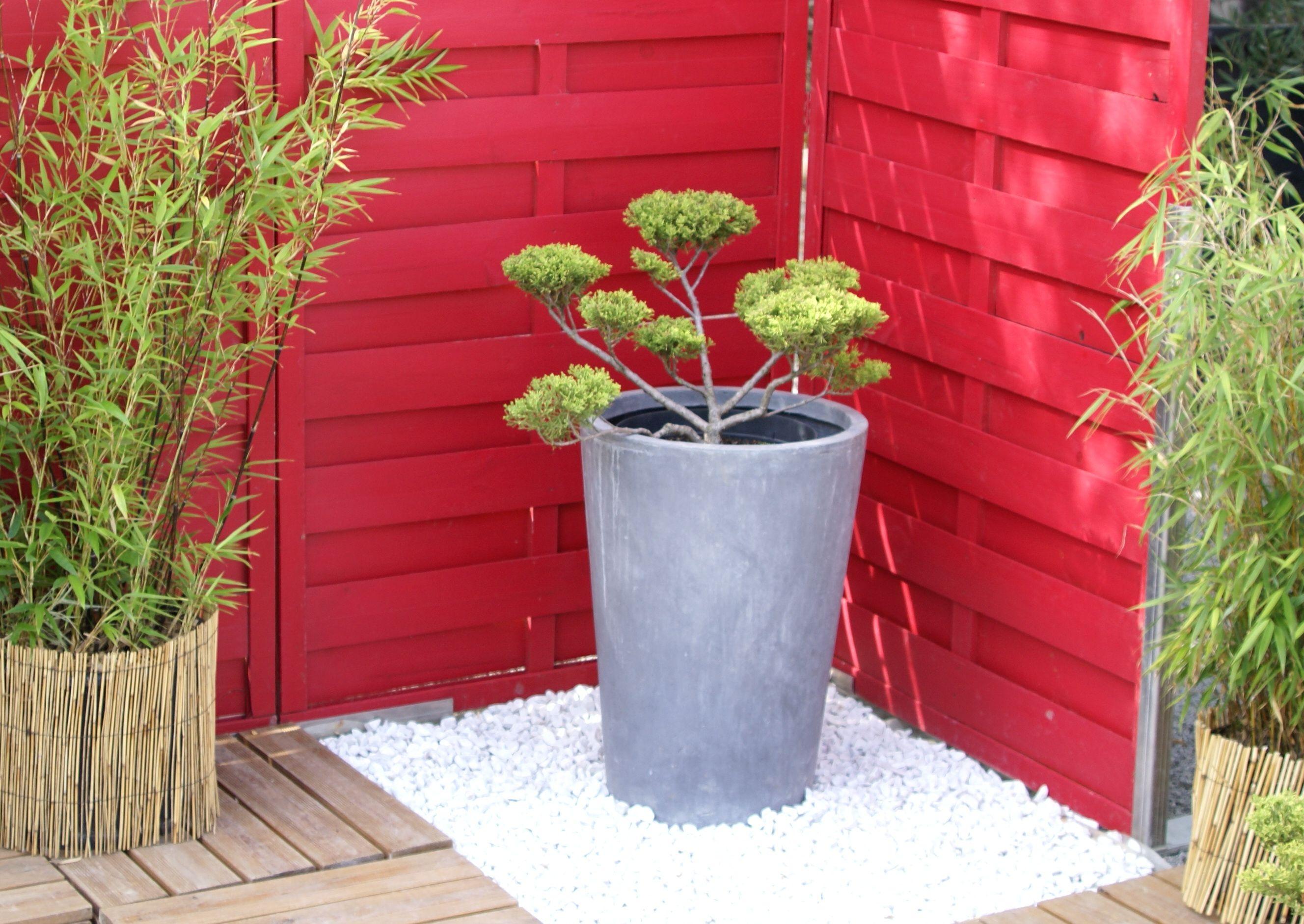 Un petit coin terrasse japonisant arbre nuage bambou for Petit jardin japonisant