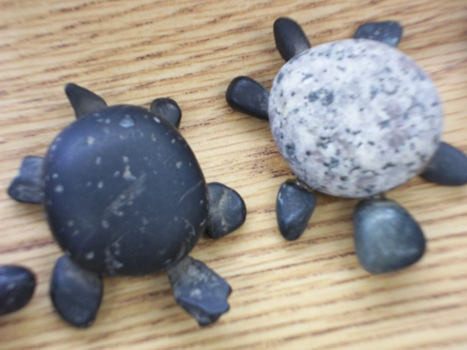The Rosamond Lane Lord Fund Turtle Art