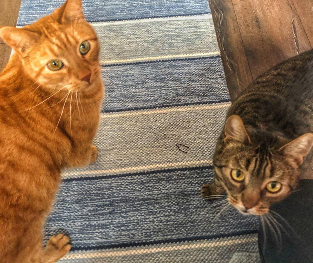 Buster Mimmi Cats Friends Cats Catsofinstagram Cat Of Catstagram Instagram Catlover Instacat Catlovers Pets Kit In 2020 Pet Kitten Kitten Meowing Kitten