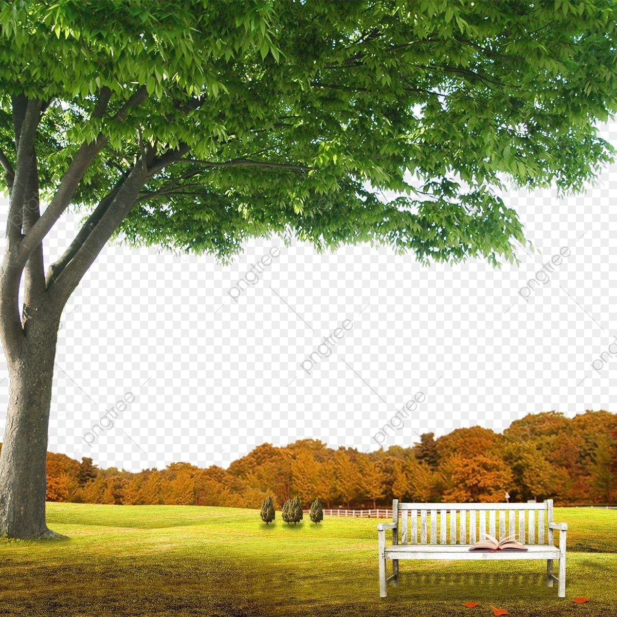 مشهد خلفية الحديقة مع الخلفية الطبيعية حديقة الصيف عطلة Png وملف Psd للتحميل مجانا Beautiful Nature Wallpaper Nature Wallpaper Natural Background