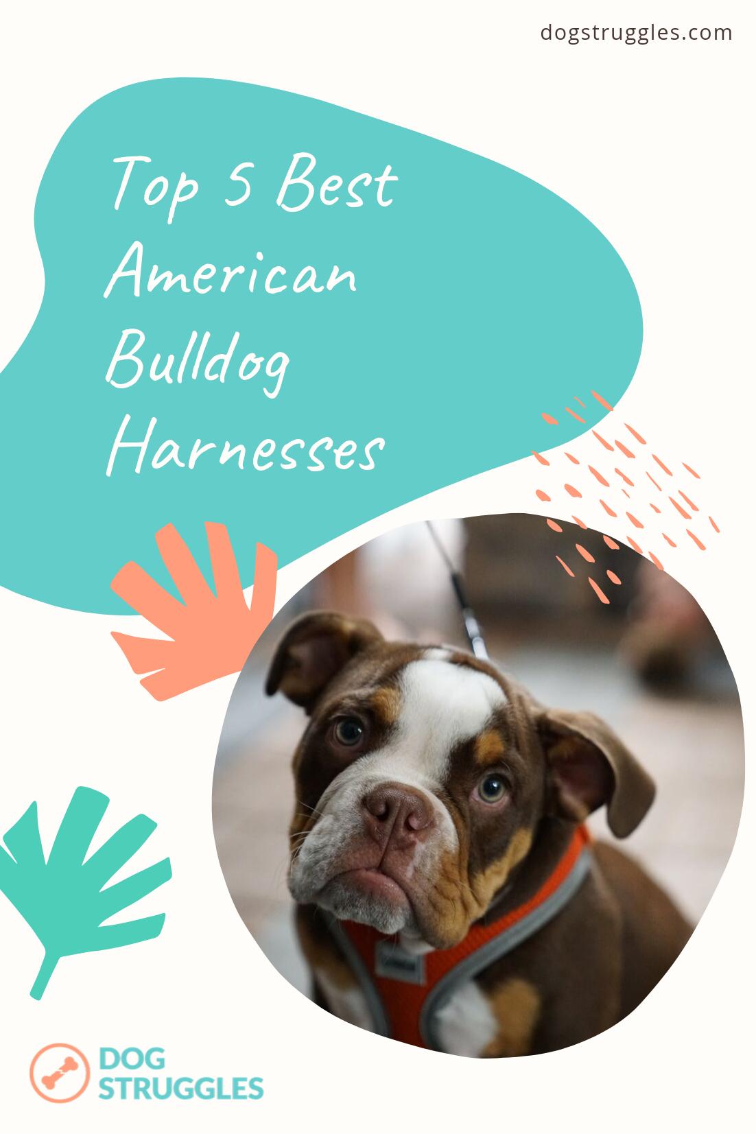 Top 5 Best American Bulldog Harnesses American Bulldog Dog Harness Bulldog