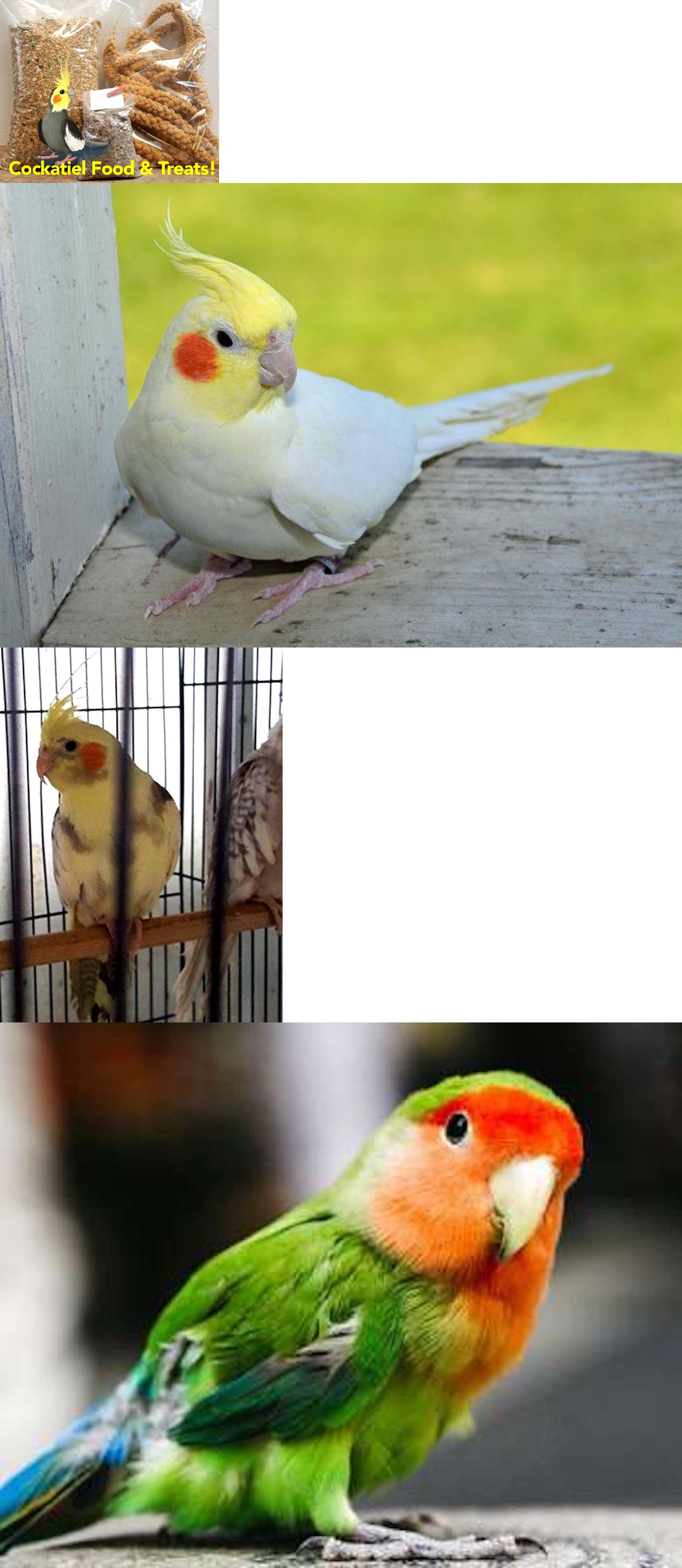 Food and treats 116494 cockatiel or love bird food and