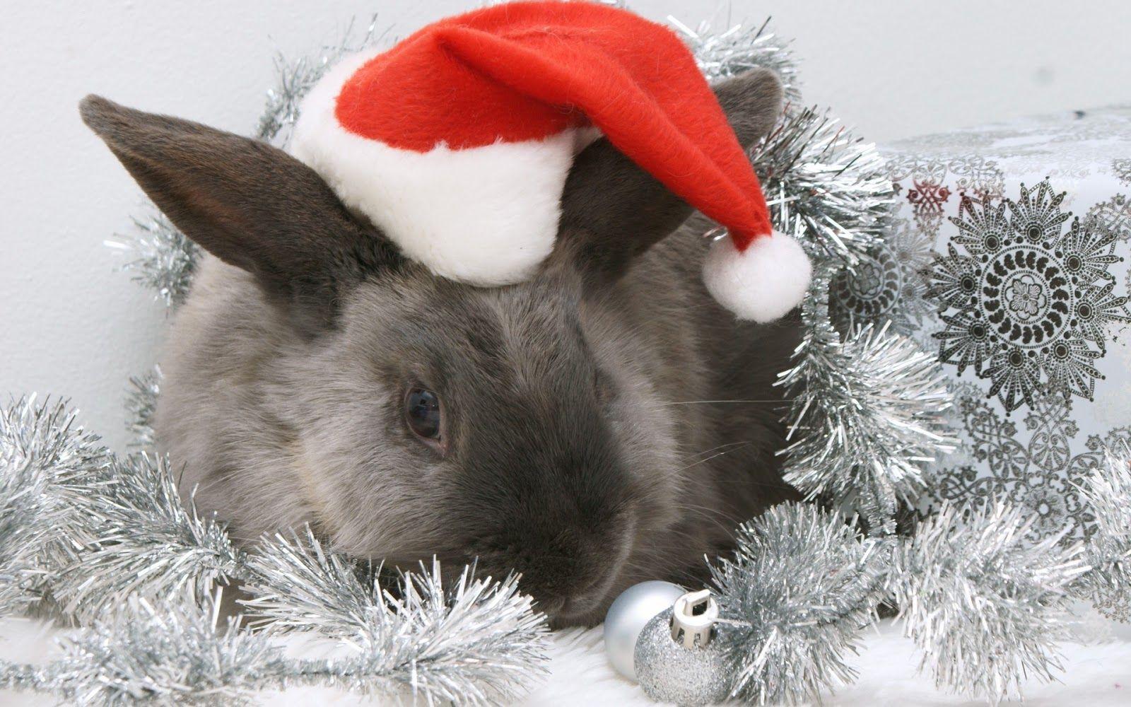Wallpaper Christmas Animals Yahoo Image Search Results Christmas Animals Christmas Bunny Pets