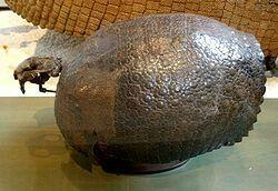 Propalaehoplophorus Minor Propalaehoplophorusis an extinct genus of glyptodont, which lived inBoliviaduring the Mioceneepoch.