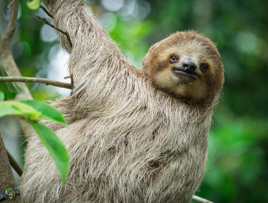 Slothy Sunday: The Wild Side of Motherhood #babysloth