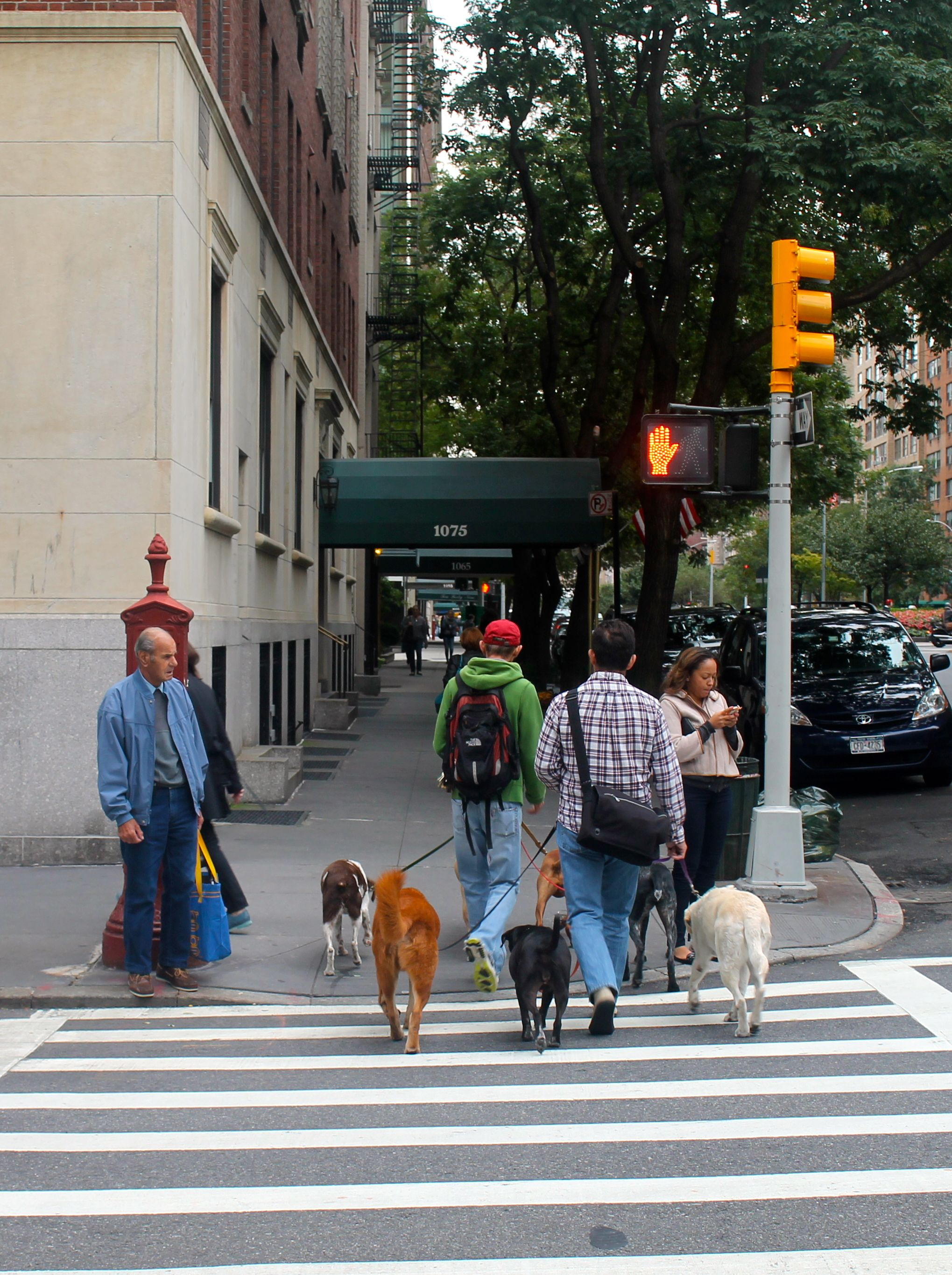 Dog Walker On The Upper East Side With Images Dog Training
